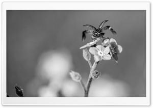 Ladybug Taking Flight Black...