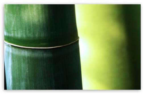 Download Bamboo Macro UltraHD Wallpaper