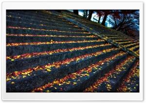 Leaves Resting On Steps