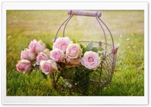 Basket of Pink Roses