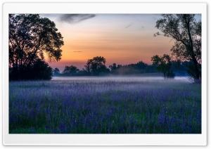 Morning, Mist, Flowers,...