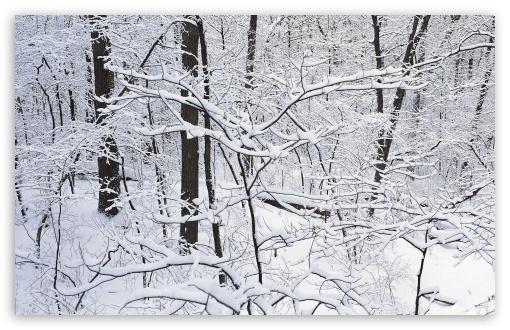 Download Winter Season 16 UltraHD Wallpaper