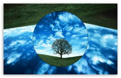 Download Just a Tree UltraHD Wallpaper