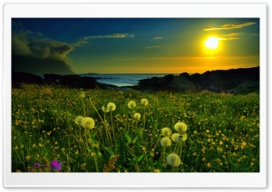 Beach Meadow