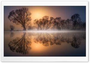 Trees, Lake, Mist