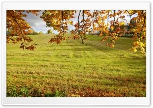Autumn Field Branches