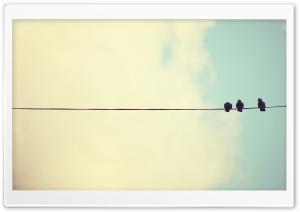 iMac Pigeons