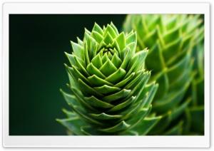 Spiral Plant