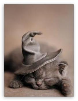 Download Halloween Cat UltraHD Wallpaper