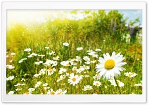 Wildflowers, Sunny Day