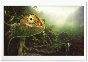 The Cheerful Chameleon