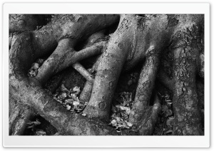 Tree Roots Black And White