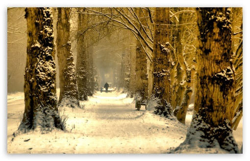 Download Beautiful Tree Alley, Winter UltraHD Wallpaper