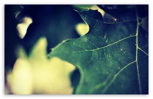 Download Green Leaf Macro UltraHD Wallpaper