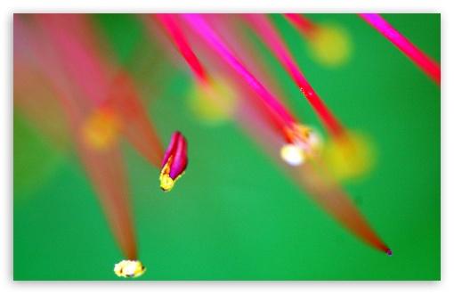 Download Lycoris Macro UltraHD Wallpaper