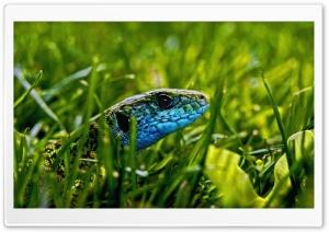 Green Blue Lizard