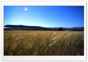 Field, Sun Reflected