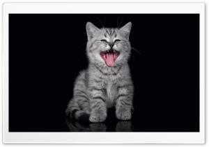 Cry Kitty