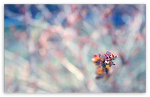 Download Plant Bokeh UltraHD Wallpaper