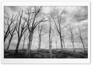 Dead Trees Black and White