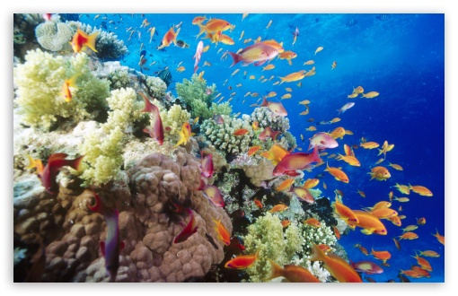 Download Coral Reef Southern Red Sea Near Safaga Egypt UltraHD Wallpaper