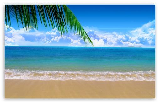 Download Palm Branch UltraHD Wallpaper