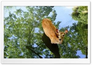 Perfect Deer