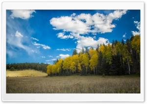 Pasture, Forest, Blue Sky