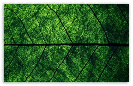 Download Leaf Veins UltraHD Wallpaper