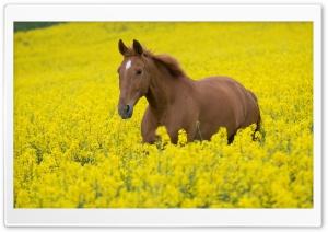 Horse In Flower Field
