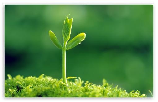Download Green Sprout UltraHD Wallpaper