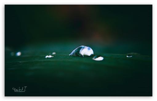 Download Beautiful Water Drops UltraHD Wallpaper