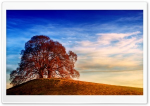 Two Trees, Hill, Landscape