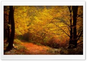 Forest Alley, Autumn