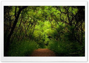 Forest Road 9