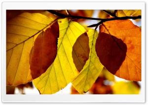 Autumn Leaves Close Up