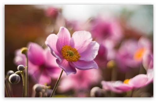 Download Macro Flower UltraHD Wallpaper