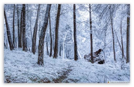 Download Winter Snowfall UltraHD Wallpaper