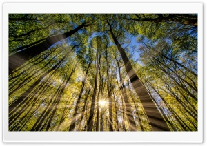 Forest, Trees, Spring, Sunbeams