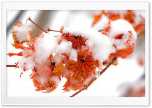 Orange Leaves, Winter