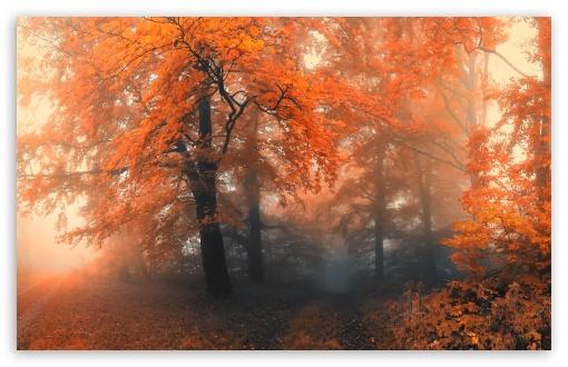 Download Autumn UltraHD Wallpaper