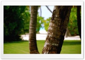 Beach Tree Trunk