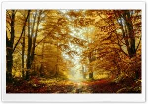 Forest Trees, Autumn