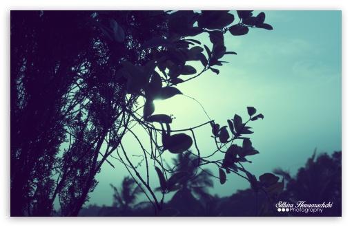 Download Evening Sky UltraHD Wallpaper