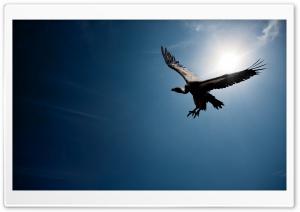 Bird In The Sky Sun