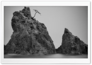 Shark Rocks
