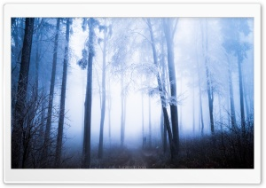 Forest, Rime on Tall Trees, Fog