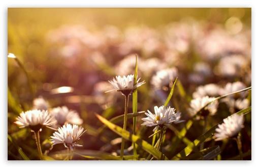 Download Meadow Flowers Macro UltraHD Wallpaper