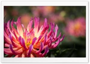 Pink and Yellow Flower Macro