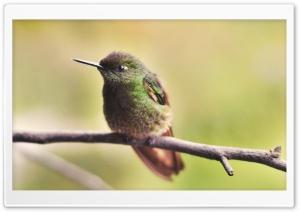Beautiful Tiny Bird
